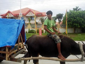 Filipino Musilim brother on a Carabao behind is the Ampatuan Mansion in Maguindanao,ARMM